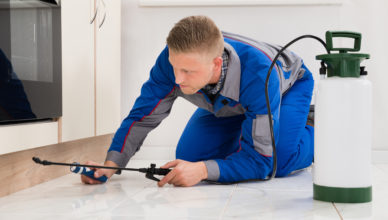 Why Avoid Diy And Hire a Pest Inspection Company?